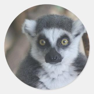 Lemur Etiqueta Redonda