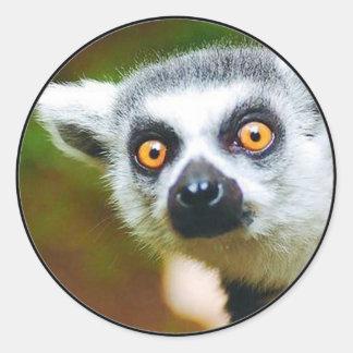 """Lemur "" Pegatina Redonda"