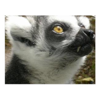 Lemur Photo Postcard