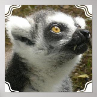 Lemur Photo Poster Print