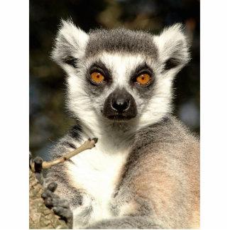 Lemur Photo Sculpture