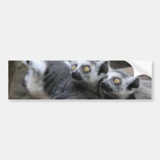Lemur Piggy Back Bumper Sticker