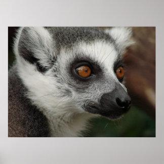 Lemur Poster