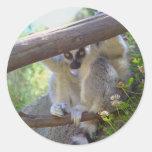 Lemur que mira a escondidas a los pegatinas pegatina redonda