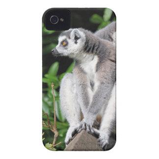 Lemur ring-tailed cute photo blackberry bold case