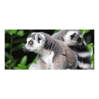 Lemur ring-tailed cute photo custom name bookmark rack card