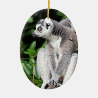 Lemur ring-tailed cute photo hanging ornament