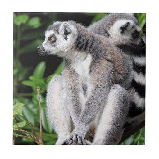 Lemur ring-tailed cute photo kitchen tile trivet