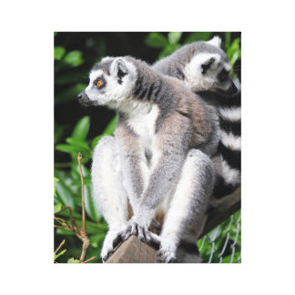 Lemur ring-tailed cute photo wrapped canvas print
