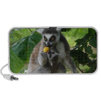 Lemur Speakers