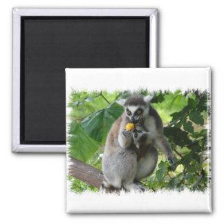 Lemur Square Magnet