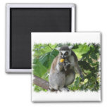 Lemur Square Magnet Magnets