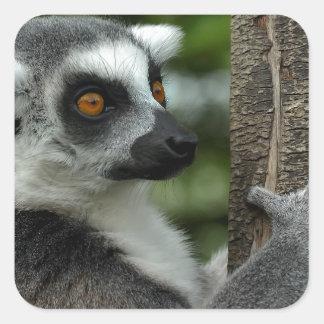 Lemur Square Sticker