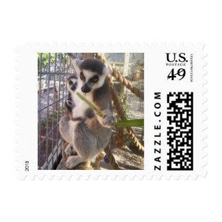 lemur stamp