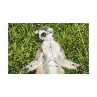 Lemur Sunbathing Stretched Canvas Prints