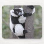 Lemur superado blanco y negro en árbol tapetes de raton