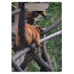 Lemur superado rojo confiado en rama