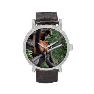 Lemur superado rojo confiado en rama reloj de mano