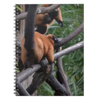 Lemur superado rojo confiado en rama spiral notebooks