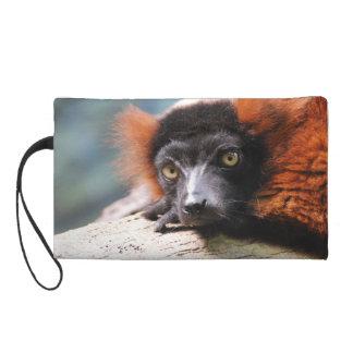 Lemur superado rojo de reclinación