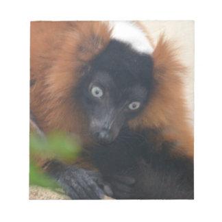 Lemur superado rojo divertido bloc de papel