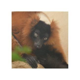 Lemur superado rojo divertido cuadro de madera