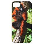 Lemur superado rojo iPhone 5 fundas