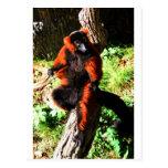 Lemur superado rojo postal