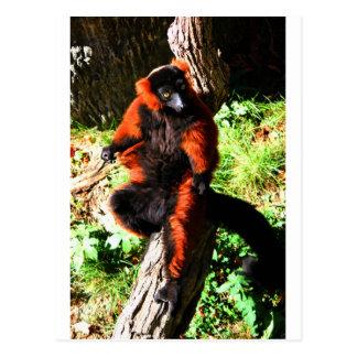Lemur superado rojo tarjeta postal