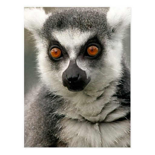 Lemur Tarjeta Postal