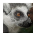 Lemur Tile