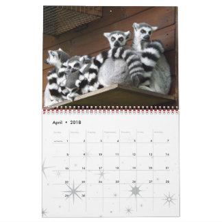 Lemur Wild Primate Welcome Home Destiny Destiny'S Calendar