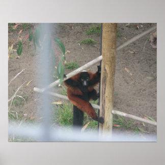 Lemurs 001 20 poster x16