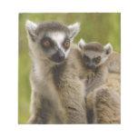 lemurs Anillo-atados (catta) del Lemur madre y beb Blocs