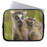 lemurs Anillo-atados (catta) del Lemur madre y beb Mangas Portátiles