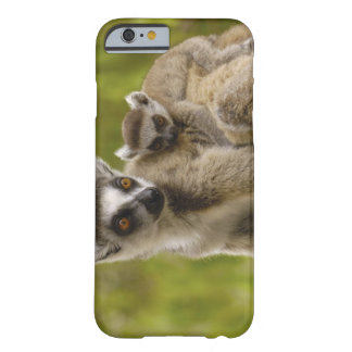 lemurs Anillo-atados (catta) del Lemur madre y Funda De iPhone 6 Barely There