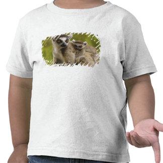 lemurs Anillo-atados (catta) del Lemur madre y Camisetas