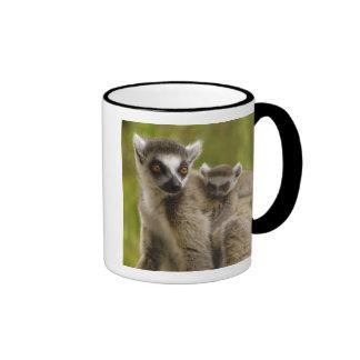 lemurs Anillo-atados (catta) del Lemur madre y Taza De Dos Colores