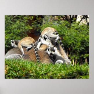 Lemurs atados anillo juguetón del bebé impresiones