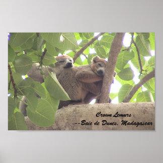 lemurs coronados impresiones