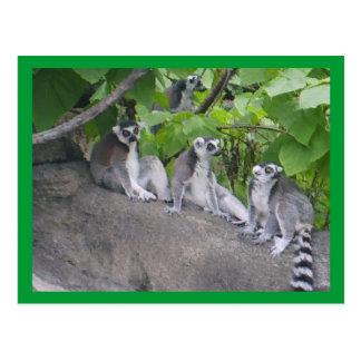 Lemurs de Leapin Postal