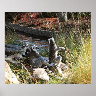 Lemurs, DiDi Poster