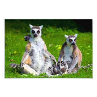 Lemurs Family Photo Art