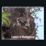 """Lemurs of Madagascar Calendar<br><div class=""""desc"""">Calendar featuring Madagascar&#39;s lemurs</div>"""