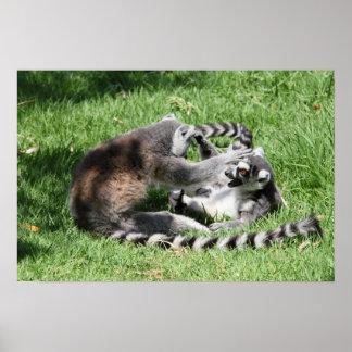 Lemurs Playing on the Grass Print