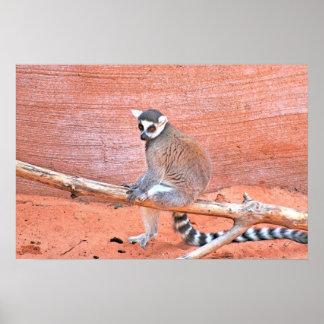 Lemurs Póster