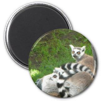 Lemurs Refrigerator Magnet