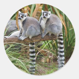 Lemurs Sticker