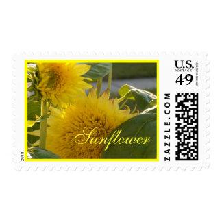 Len Yellow Sunflowers Postage