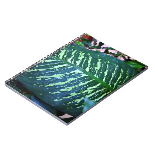 Lengthy two-tone leaf spiral note books